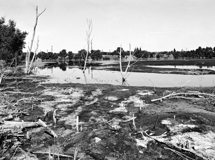 Durch Einleitung von Abwässern verschmutztes Ufer des Silbersees. Das Foto stammt vom 12. August 1991. Quelle: Bundesregierung / Joachim F. Thurn